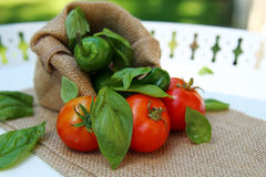 Tomatoes, basil leaves and Jalapeno peppers Royalty Free Stock Images