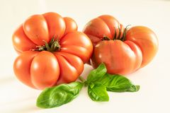 Tomatoes and basil on white background stock images