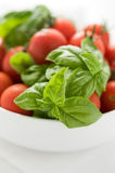 Tomatoes and basil in white plate royalty free stock photos