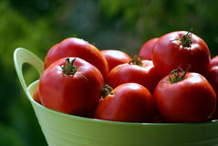 Tomatoes in basket. Close up on tomatoes in basket stock photography
