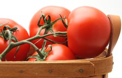 Tomatoes in Basket. Fresh picked red vine tomatoes in basket white background royalty free stock photos