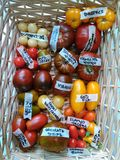 Tomatoes in basket 4. Tomatoes, cucumbers and chili on rocks and wooden floor Royalty Free Stock Image