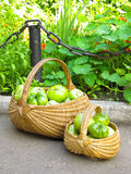 Tomatoes in a basket Stock Images