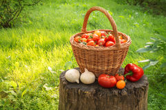 Tomatoes in basket, onion and pepper on stump in garden Royalty Free Stock Photography