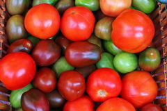 tomatoes in a basket Stock Photos