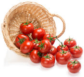 Tomatoes  in a basket is scattered Royalty Free Stock Image