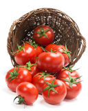 Tomatoes  in a basket is scattered Royalty Free Stock Photos