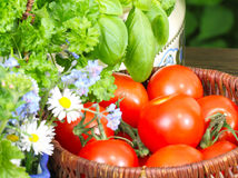 Tomatoes in the basket Stock Image