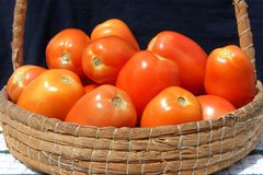 Tomatoes in the basket stock photography