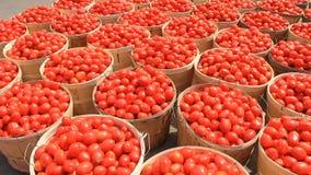 Tomatoes  stock video