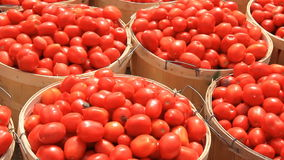 Tomatoes 2 stock footage