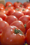 Tomatoes beautiful and fresh Stock Photo