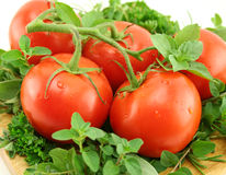 Tomatoes On A Bed Of Herbs Stock Photography