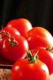 Tomatoes on Black. Garden tomatoes on black background Royalty Free Stock Photo