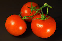 Tomatoes on the black background royalty free stock images