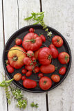 Tomatoes on black round platter. Different tipes of tomatoes, on round, black platter, on wooden rustic table, with basil flower and leafs on sides, white Stock Photography