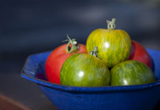 Tomatoes in Blue Bowl Royalty Free Stock Photos