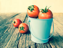 Tomatoes in blue bucket Royalty Free Stock Photos