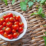 Tomatoes in bowl, on picnic basket, tomato leaves in background. Stock Image