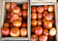 Tomatoes box Stock Images