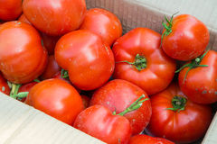 Tomatoes in the box. Lots of tomatoes in the box stock photos