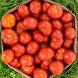 Tomatoes in box. Box with small ripe tomatoes Royalty Free Stock Images