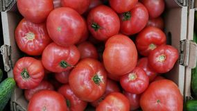 Tomatoes in box are stored in the warehouse, fresh organic vegetables stock image