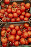 Tomatoes in boxes on the store shelf stock image