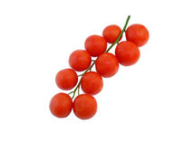 Tomatoes on a branch. Image of red tomatoes on a white background Stock Photos