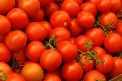 Tomatoes on branch. Many raw uncutted tomatoes with branches Stock Photography
