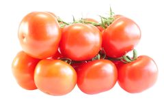 Tomatoes with a branch Stock Photography