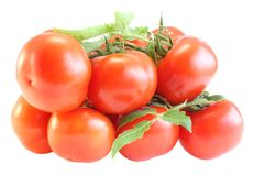 Tomatoes with a branch Royalty Free Stock Photography