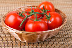 Tomatoes on branch Stock Images