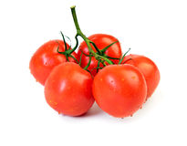 Tomatoes on branch Royalty Free Stock Photos