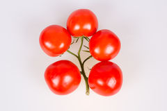 Tomatoes on a branch. Isolated on a white background Stock Photography
