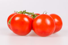 Tomatoes on a branch. Isolated on a white background Stock Images
