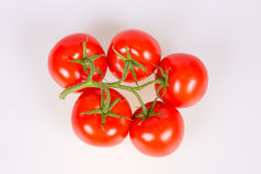 Tomatoes on a branch. Isolated on a white background Royalty Free Stock Photos