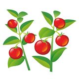 Tomatoes on a branch. Set of hand drawn flat vector illustration vector illustration
