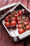 Tomatoes on branches Royalty Free Stock Photos