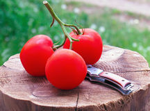 Tomatoes for breakfast. In the fresh air Stock Photography