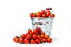 Tomatoes in a bucket Royalty Free Stock Photo