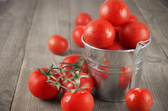 Tomatoes in bucket. Whole wet tomatoes in galvanized bucket on rustic wooden table Royalty Free Stock Photography