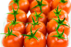 Tomatoes. A bunch of tomatoes aligned in a box royalty free stock photos
