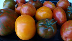 Tomatoes 30. Bunch of colorful tomatoes with stripes Royalty Free Stock Photo