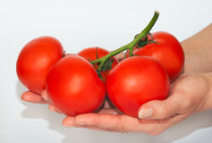 Tomatoes bunch in hand Royalty Free Stock Photos