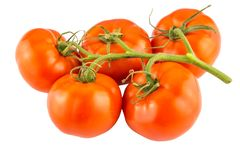 Tomatoes bunch isolated on white background close up. Tomatoes bunch isolated on white background close up Royalty Free Stock Photos