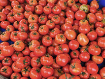 Tomatoes in a bunch Royalty Free Stock Image