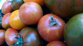 Tomatoes 35. Bunch odf different types of tomatoes with stripes Stock Image