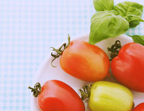 Tomatoes card Stock Photos