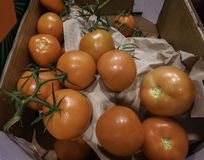 Tomatoes in cardboard box royalty free stock photos